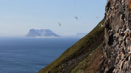 motorbot : Unforgettable landscape of Arctic Islands. Ocean, table mountain, snowfield, waterfall, sea birds on rocks. NORTHBROOK isl, Franz Josef Land. Stok Video