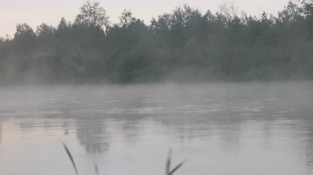 creeping : Warm summer rain on forest river, light fog over water. August morning, unusual combination of rain, fog and sunrise Stock Footage