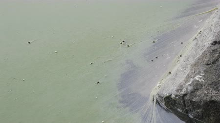 bionomics : Blanket film formed on  surface of water due to algae bloom,  cyanobacteriae. Deficiency of oxygen,  air hunger