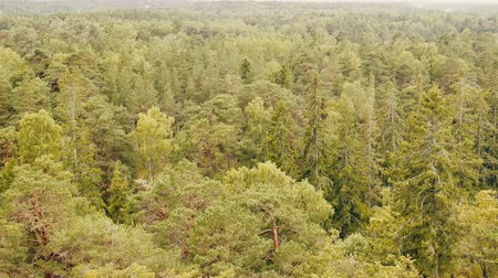 breeding season : Pure coniferous forest,  boreal coniferous forest, taiga, top view and side view Stock Footage