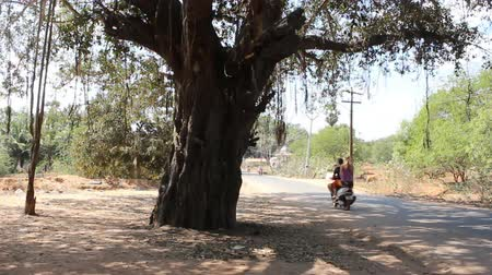мостовая : India, Puducherry  - January 30, 2016:  Daily life of India 10. On way tourists on scooters. Rent motorcycles popular. In foreground is sacred Banyan tree
