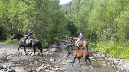 проворный : Russia, Altai Republic - July 15, 2016: riders on horseback cross  river, and a young foal