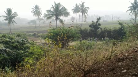 necessidade : India, Anantapur - February 8, 2016: Village school children go to classes on early morning country road in middle of foggy fields and palm groves. Exotic video