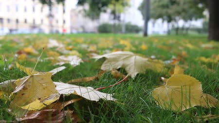 constitutional : Autumn arrived in city, urban nature. First yellow leaves in square, public garden. Fallen leaves and grass in raindrops. Walk in Park, autumn mood. Cars and passers-by in background