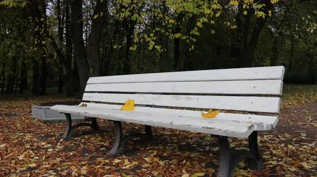 parkland : Falling leaves. Autumn in city Park in yellow leaves. Yellow maple leaves on garden bench, sad mood of past summer Stock Footage