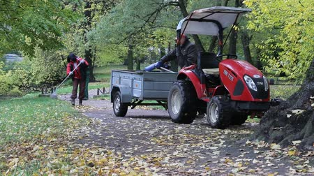 проливая : Russia, Saint Petersburg - October 14, 2017: In Park gardeners raked with tracks yellow foliage. Compact tractor with cart for leaves. Autumn Park management, gardening equipment Стоковые видеозаписи