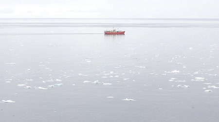 realization : Among drifting ice sailing ships flying around lot of birds. Panorama of Barents sea at polar summer