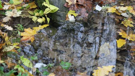 drinking water supply : Rill in autumn forest. Spring gushes under from stone, a lot of yellow leaves swirls on surface of water, yellow leaves, defoliation. Autumn ball