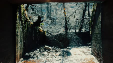 kuşatma : Old tunnel, entrance to mine, underpass, flowing stream, spring forest, overgrown with ivy entrance.
