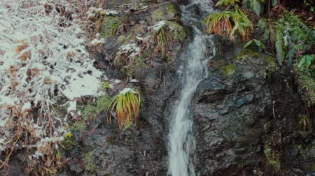 laur : fragment of subtropical nature in winter cold. Creek flows from rocky wall, epiphytes, ferns, cereals, evergreen shrubs, wet snow. Vagaries of weather