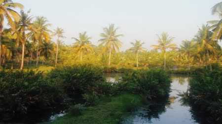 morass : Backwaters of Kerala, India, Lush swamp and sago palms Stock Footage