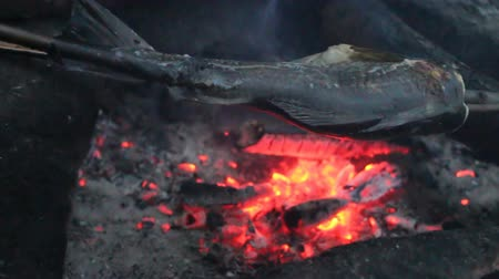 szczupak : Fishing field kitchen, grilled fish. Roasting fish (gratinate) on wooden skewer over coals, fish dish, fish meal, fish course, natural food Wideo
