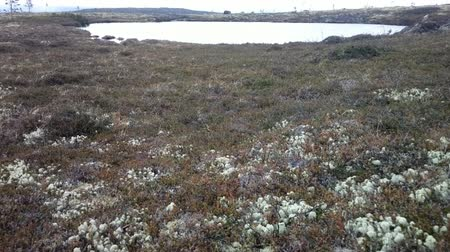 sararmış : plot is high bog with lake and hunting cabin, swamp pine, mosses, lichens, dwarf birch and Labrador tea