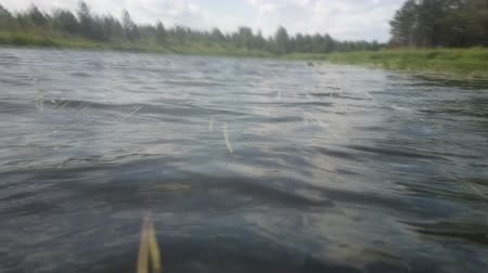 uklidňující : Swim at forest lake. Camera on head of swimmer, low camera position over waves and water plants