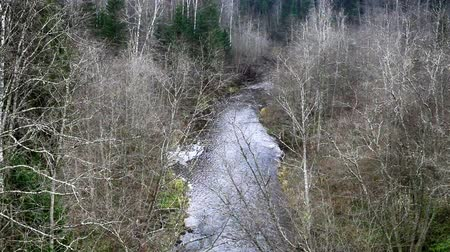 softwood forest : Taiga river in early spring, river canyon. Riparian forest grows in canyon, bare branches of alder and birch, spruce - mixed wood Stock Footage