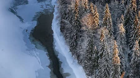 pristine : Mountain river, landfast ice, snow, forest in Siberia, submerged land-fast ice, ice-free area along shore of lake, ice-free area along bank of river, view from top Stock Footage