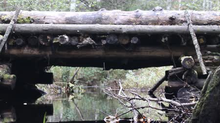suyolu : Wooden bridge, log bridge, log structure. Timber road, wooden bridge on haulage road through forest small river. Bridge is made of logs. Autumn, dry leaves floating on water