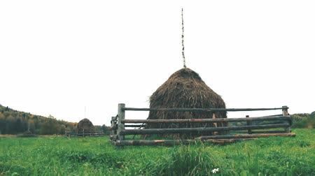 packing hay : Autumn. Hay dried and assembled in stack. Traditional method of rick, make into stacks Northern Russian peasants, fencing from wild ungulates. Vepsian region Stock Footage