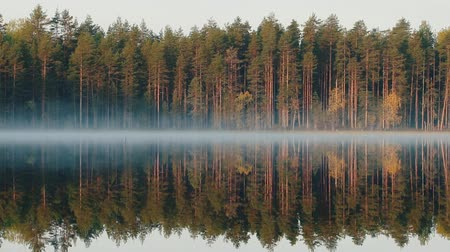 zift : Autumn in Northern coniferous forest. Yellow birches reflect and tremble in waters of quiet forest lake. Misty morning