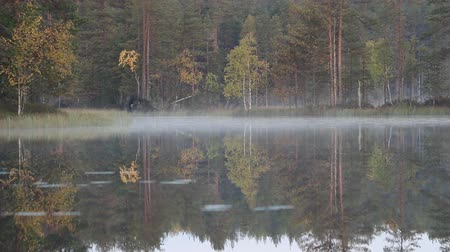 opadavý : Autumn in Northern coniferous forest. Yellow birches reflect and tremble in waters of quiet forest lake. Misty morning
