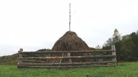 hay fields : Autumn. Hay dried and assembled in stack. Traditional method of rick, make into stacks Northern Russian peasants, fencing from wild ungulates. Vepsian region Stock Footage