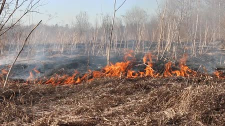 bush fire : Prairie fire. Dry grass blazes among bushes, fire in bushes area. Fire in shrub kills huge number small animals, especially insects. Climate change, increased frequency fires, destruction of forests Stock Footage