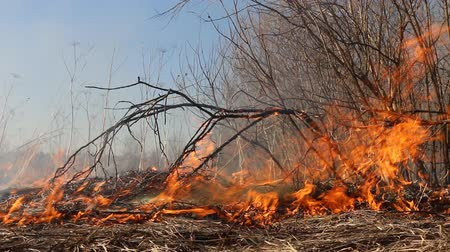 frekans : Prairie fire. Dry grass blazes among bushes, fire in bushes area. Fire in shrub kills huge number small animals, especially insects. Climate change, increased frequency fires, destruction of forests Stok Video