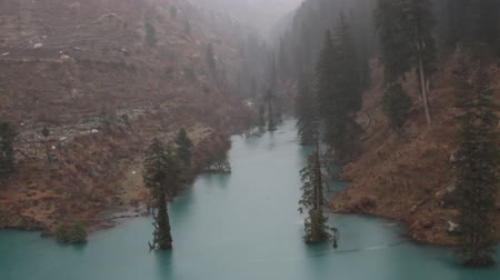 morinda : Himalayan firs (Abies spectabilis) and Himalayan spruce (Picea morinda) in water. Amazing flooded forests. Trees rise from lake, deluge. Unusual Himalayan valley, wonder of the world, seven wonders