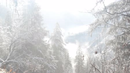 melts : Rare filming. Snow fell in subtropical Himalayan valley for first time in decade, snow-covered mountain slopes. Snow falls and immediately melts, flows down from trees Stock Footage