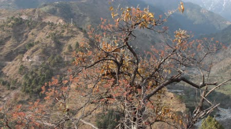 himaláje : Spring in Himalayas. View of awakened mountain valley and first greenery on trees