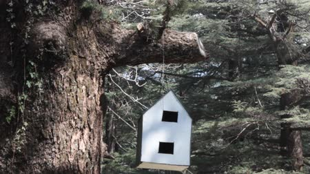 starling : Birdhouse for birds and squirrels. White birdhouse in forest of Himalayan firs Stock Footage