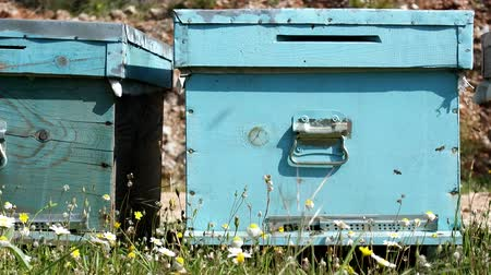 imkerei : Hives and other beekeeping appliance for breeding bees and obtaining honey, harvest honey. Beekeeping in Asia Minor, Turkey Videos