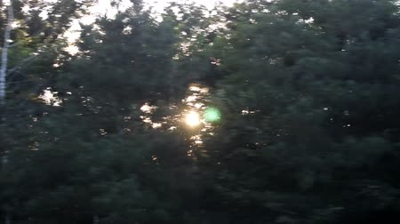 cheerless : Forest in backlight. Low evening sun through trees. Stock Footage