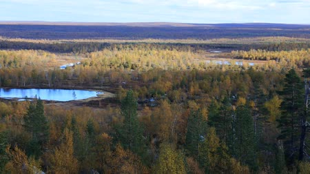 softwood forest : Autumn in the taiga lake district of Scandinavia. Panorama of the Northern boreal forests with pine and birch. Stock Footage