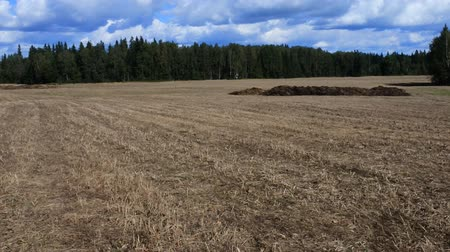 livestock sector : harvested field, stubble left after crop of wheat and expects arable land. In the background, a pile of manure. Agriculture in temperate zone. Low camera position on ground Stock Footage