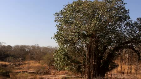 akacja : agricultural land in desolate deserted areas of the bushes (veld), dry season, tropical winter