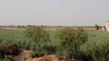 kırsal ekonomi : Rice crops in India. The view from a passing train