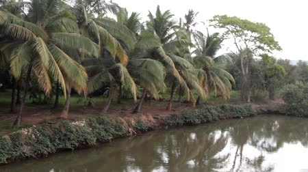 areca : Kerala backwaters. India. Palm trees on the Bank of the canal and shrub thickets with acacia