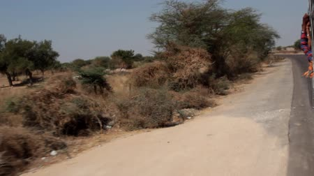 townsman : Road through arid areas of Northern India. On the roadside flashed in the Savannah separate acacia trees and prosopis Stock Footage