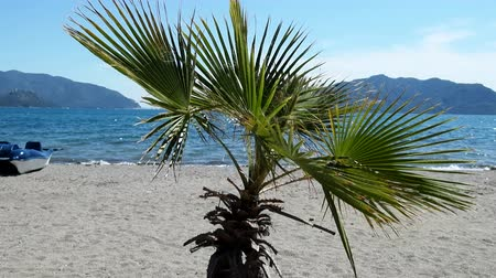 unutulmayan : Artificially grown palm tree on the beach. Mediterranean through the prism of the sea resort mass. Mountains, sea Bay, water bike in the background