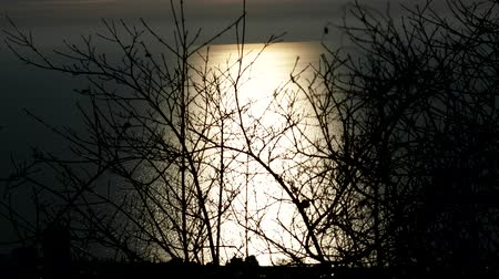slough : Wide lunar path (moon glade) through the winter forest to the sea, moonlight night. The fluttering of branches creates the effect of the movement of reflected moonlight Stock Footage