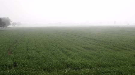 fruitful : Fields of winter wheat in the spring and groves in the morning fog. Asia minor. Turkey Stock Footage