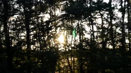 мрачный : Forest in backlight. Low evening sun through trees. Стоковые видеозаписи