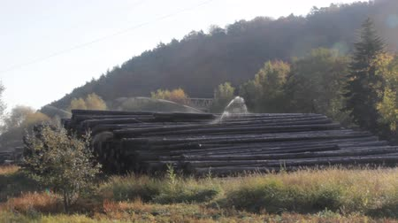 fungos : Water pile of logs (stack of logs, log deck). Sprinkler irrigation as way of preserving wood - creating microclimate and oxygen-free environment for fungi and forest pests. Wood industry in France Stock Footage