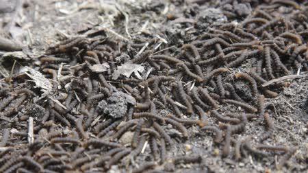 disintegration : A lot of swarming worms in ground. Grave worms, death worm (And they shall lie down alike in the dust, and the worms shall cover them. Bible). Larvae, caterpillars of insects, saprobionts a necrophage