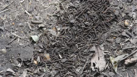 растворение : A lot of swarming worms in ground. Grave worms, death worm (And they shall lie down alike in the dust, and the worms shall cover them. Bible). Larvae, caterpillars of insects, saprobionts a necrophage