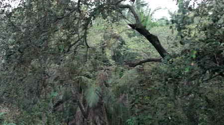 beckoning : Jungle in winter. India. The state of evergreen vegetation. The trees are covered with flaccid semi-dry leaves, palm trees with saggy branches. This is what a tropical winter forest looks like Stock Footage