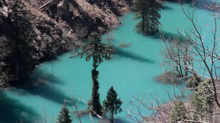 morinda : Himalayan firs and Himalayan spruce in water. Amazing flooded forests, turquoise lake. Trees rise from lake. Unusual Himalayan valley, wonder of world, seven wonders