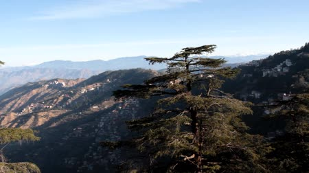 shiva : The Gorge in the Sivalik mountains. In the foreground, the top of the Himalayan cedar. Houses of mountain dwellers climb the steep slope Stock Footage