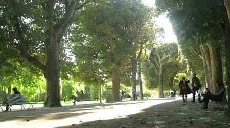 Paris, France - 24.09.2017: Alley of huge old linden trees and plane trees gives an opportunity for walks of citizens Wideo
